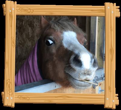Pony Rides for Kids at Blackberry Farm Park