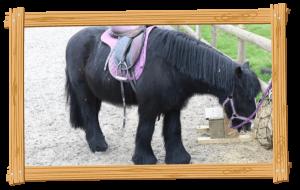 Gypsy Cob Pony